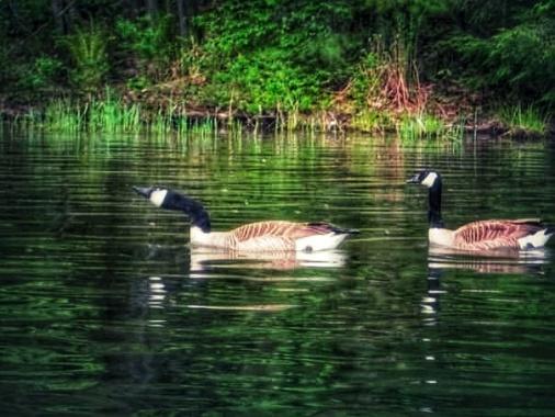 wild geese.jpeg